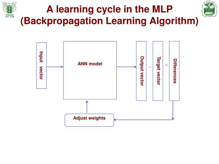 A learning cycle in the MLP
