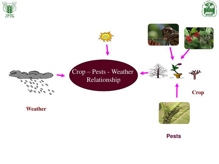 Crop – Pests - Weather
