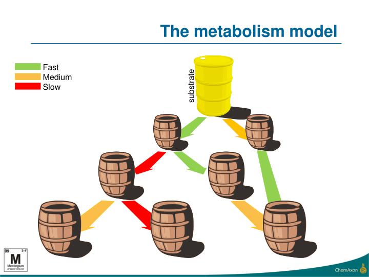 The metabolism model