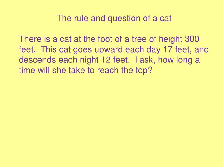 The rule and question of a cat