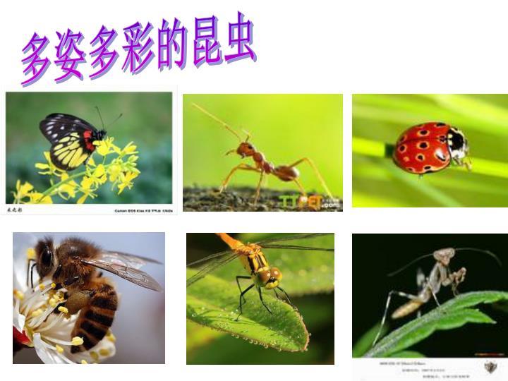多姿多彩的昆虫