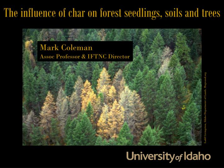 The influence of char on forest seedlings, soils and trees