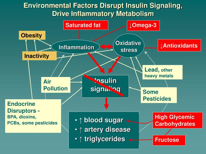 Environmental Factors Disrupt Insulin Signaling,