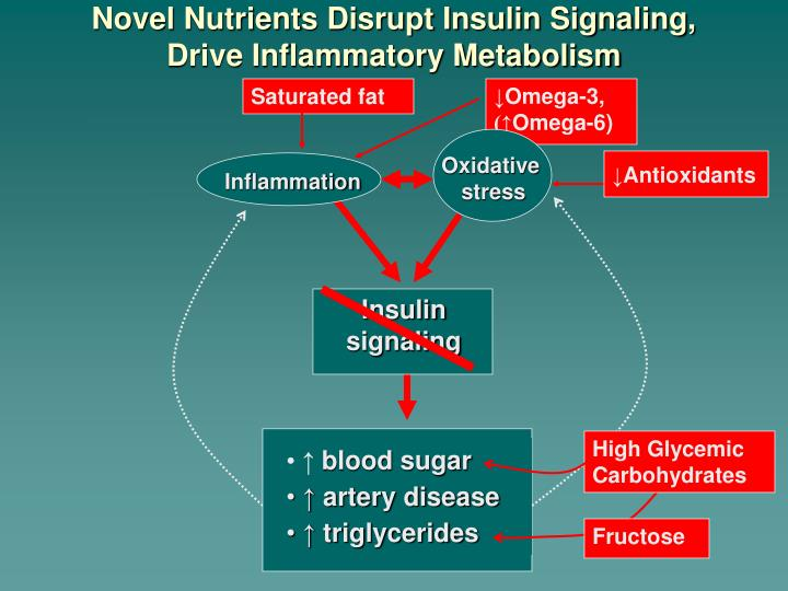 Novel Nutrients Disrupt Insulin Signaling,