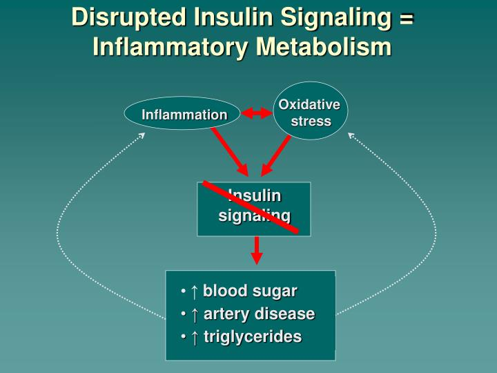 Disrupted Insulin Signaling =