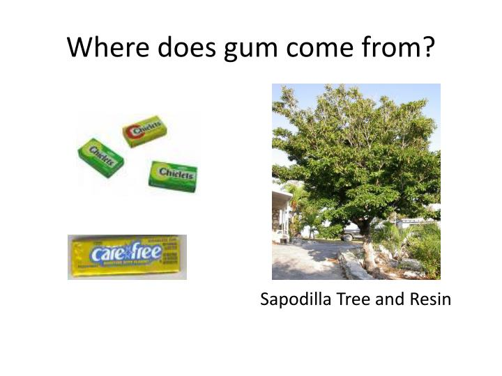 Where does gum come from