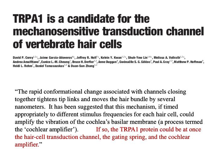 """The rapid conformational change associated with channels closing together tightens tip links and ..."