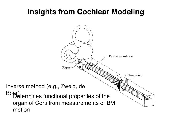 Insights from Cochlear Modeling