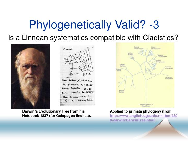 Phylogenetically Valid? -3