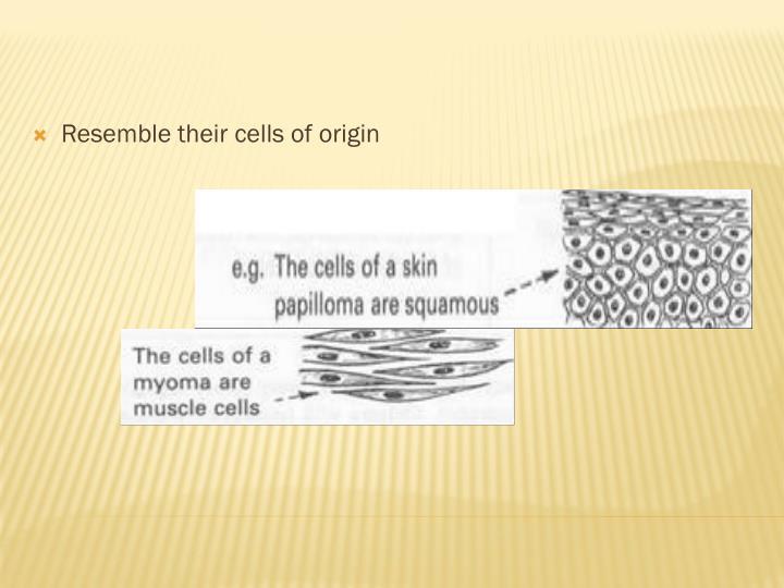 Resemble their cells of origin