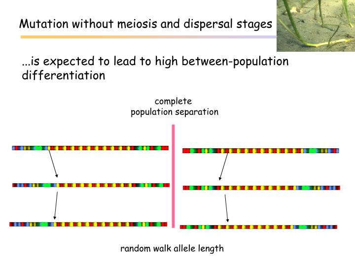 Mutation without meiosis and dispersal stages