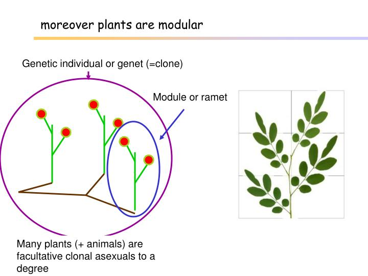 moreover plants are modular