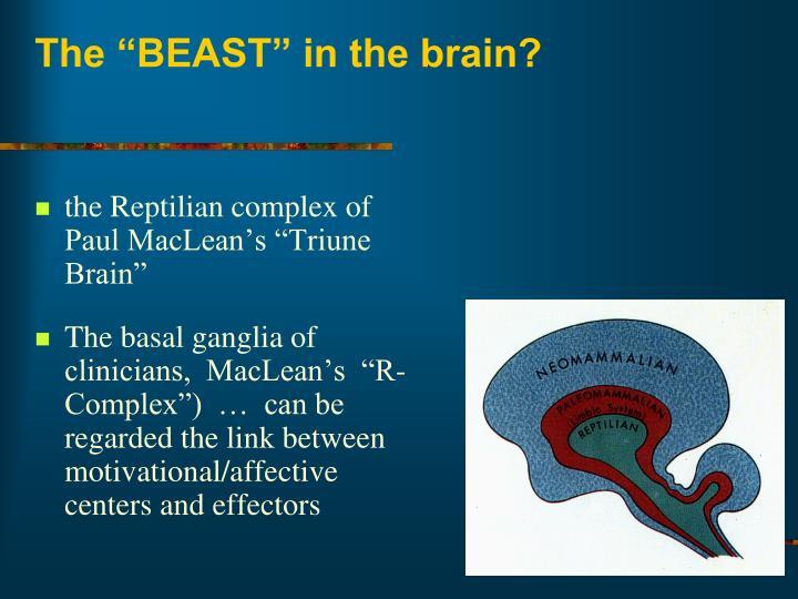 "The ""BEAST"" in the brain?"