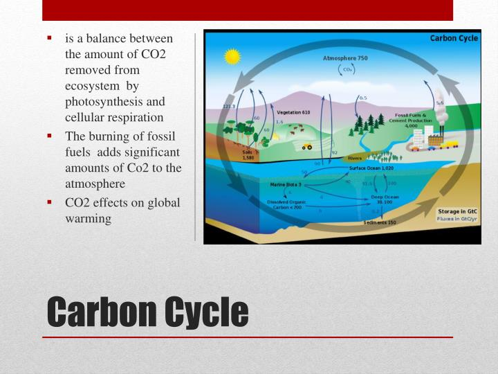 is a balance between the amount of CO2 removed from ecosystem  by photosynthesis and cellular