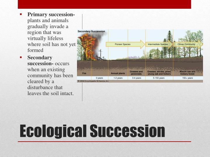 Primary succession-