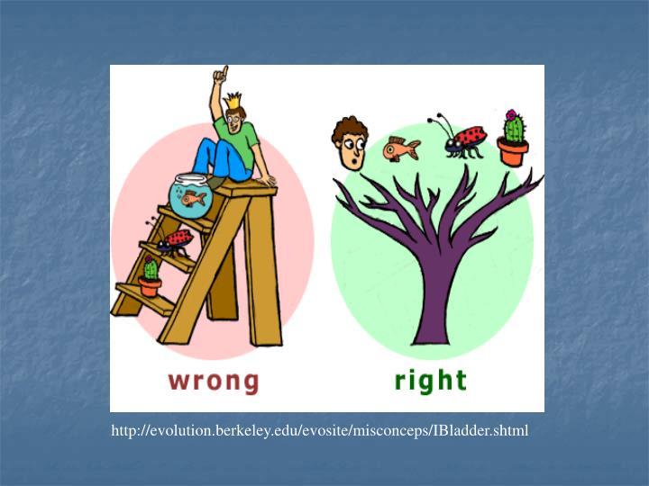 http://evolution.berkeley.edu/evosite/misconceps/IBladder.shtml