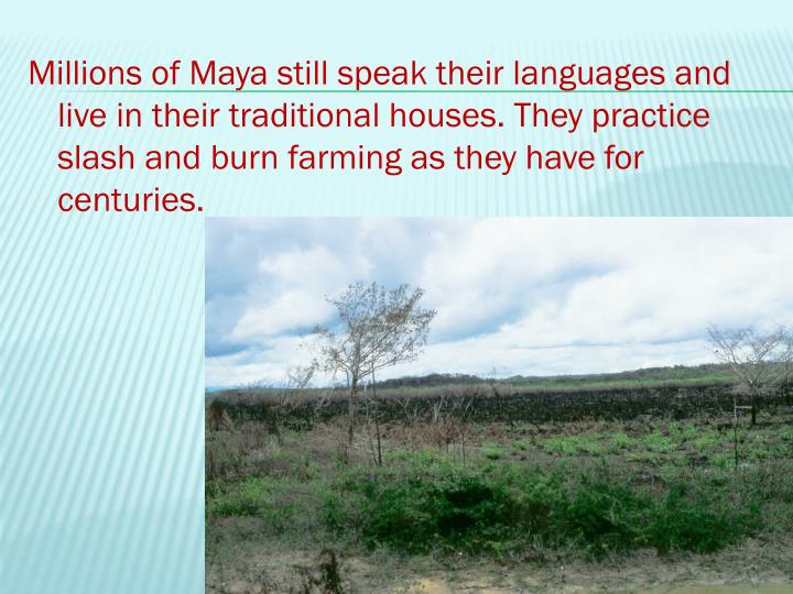 Millions of Maya still speak their languages and live in their traditional houses. They practice slash and burn farming as they have for centuries.