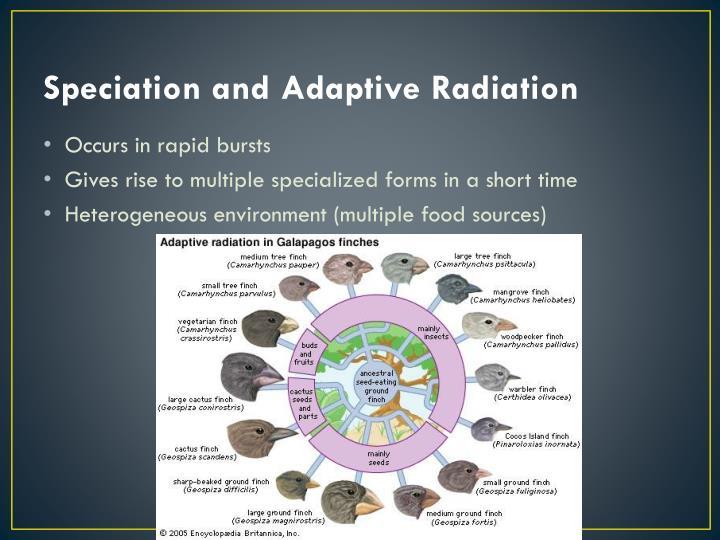Speciation and Adaptive Radiation