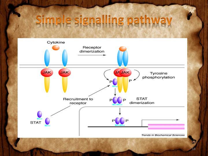Simple signalling pathway