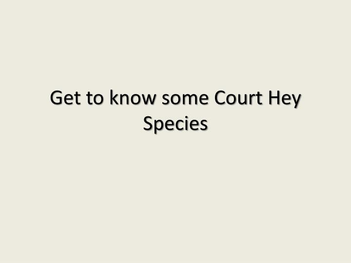 Get to know some Court Hey Species