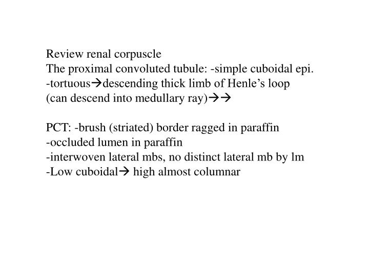 Review renal corpuscle
