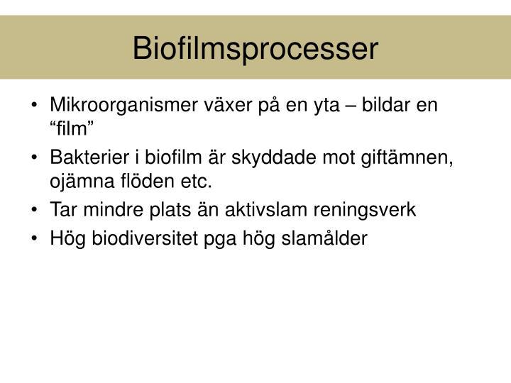 Biofilmsprocesser