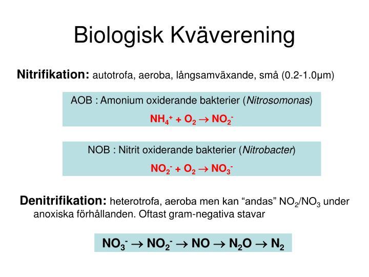 Biologisk Kväverening