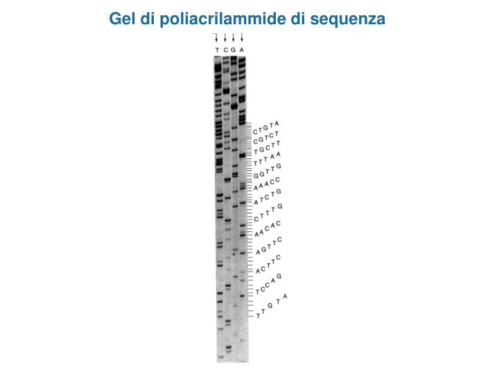 Gel di poliacrilammide di sequenza