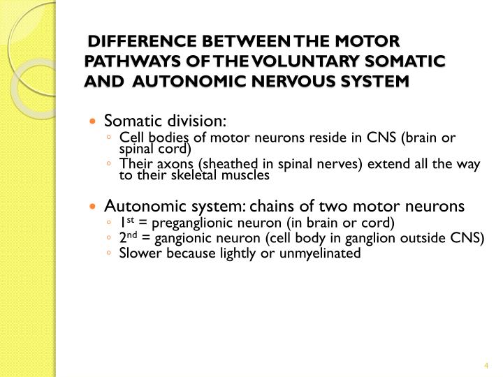DIFFERENCE BETWEEN THE MOTOR PATHWAYS OF THE VOLUNTARY SOMATIC AND  AUTONOMIC NERVOUS SYSTEM