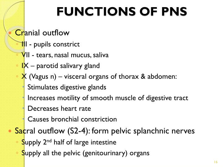 FUNCTIONS OF PNS