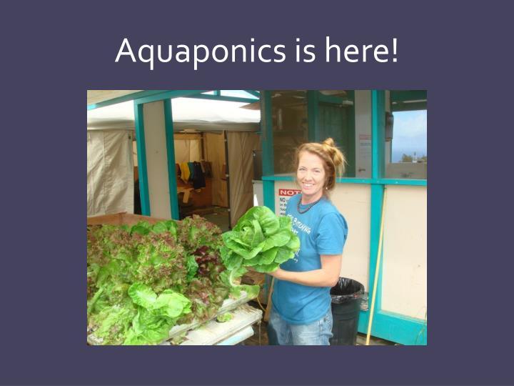 Aquaponics is here!