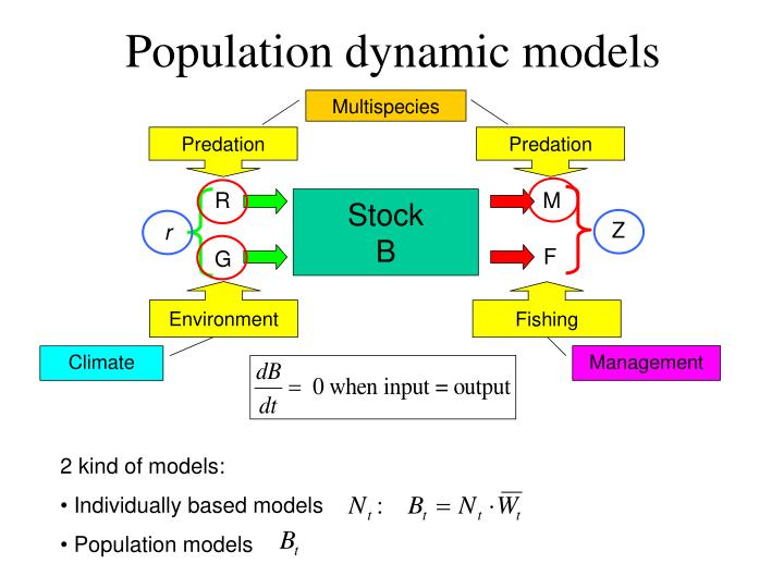 Population dynamic models