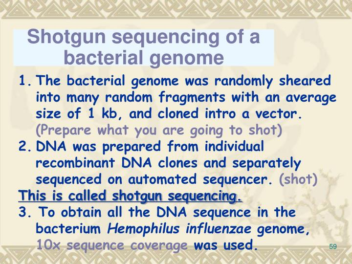 Shotgun sequencing of a bacterial genome