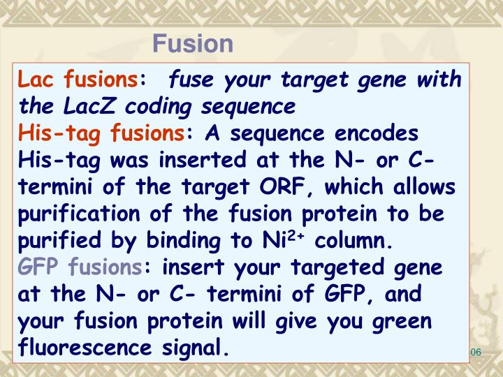 Fusion proteins