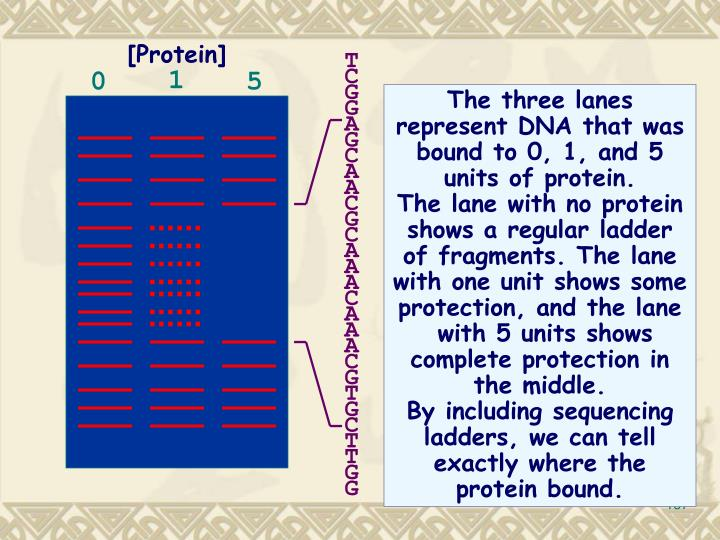The three lanes represent DNA that was bound to 0, 1, and 5 units of protein.