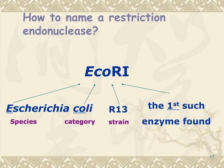 How to name a restriction endonuclease?