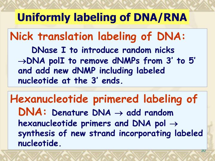 Uniformly labeling of DNA/RNA