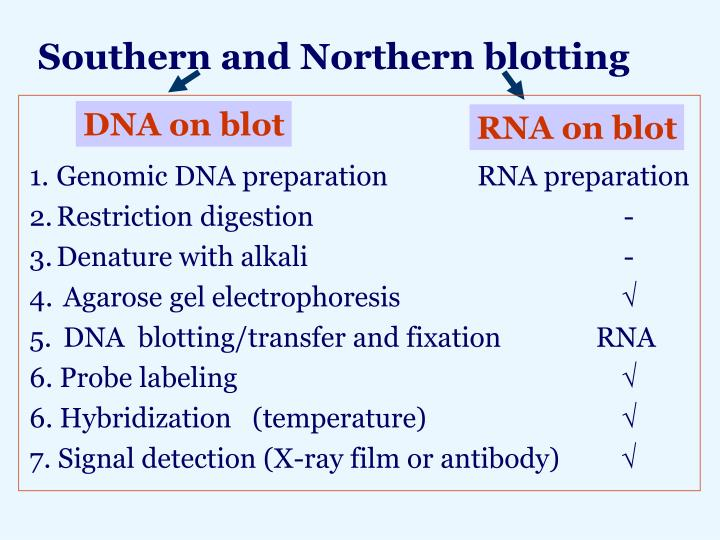Southern and Northern blotting