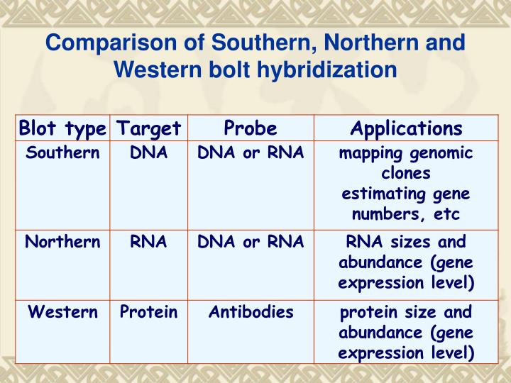 Comparison of Southern, Northern and Western bolt hybridization