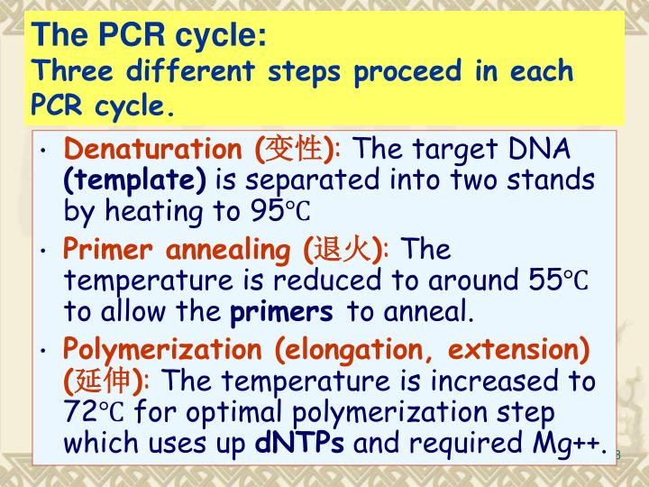 The PCR cycle: