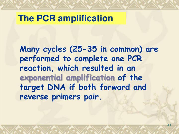 The PCR amplification