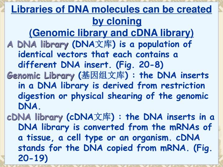 Libraries of DNA molecules can be created by cloning