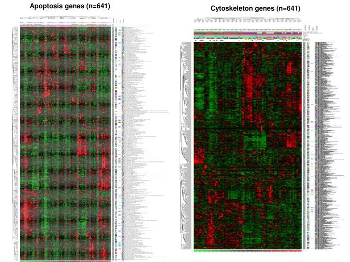 Apoptosis genes (n=641)