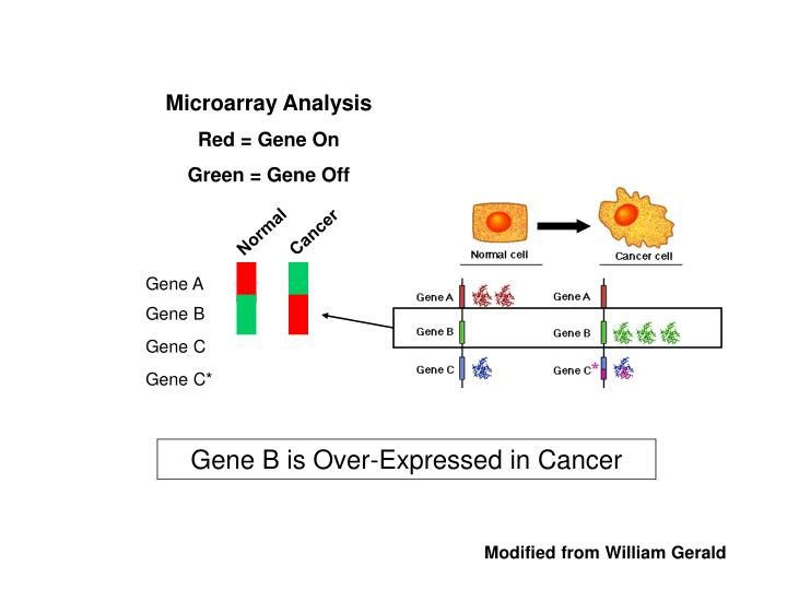Microarray Analysis