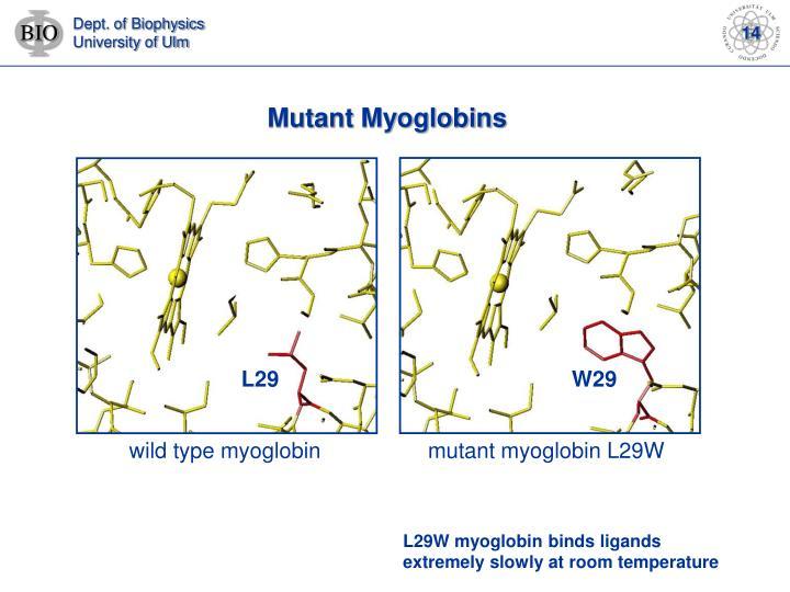 Mutant Myoglobins