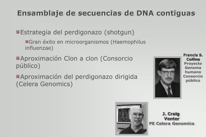 Ensamblaje de secuencias de DNA contiguas