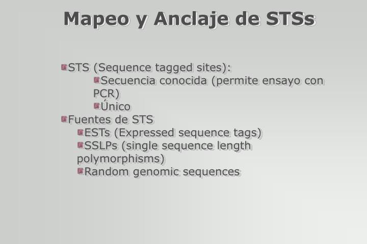 Mapeo y Anclaje de STSs