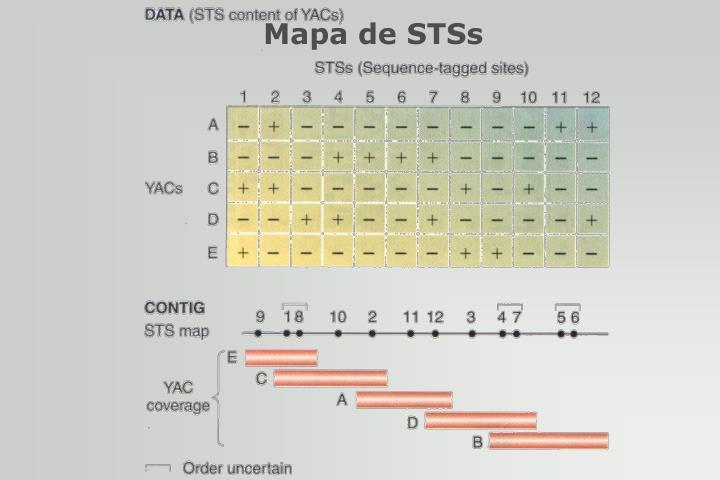 Mapa de STSs