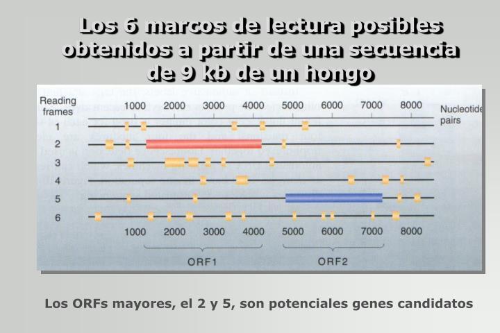 Los 6 marcos de lectura posibles obtenidos a partir de una secuencia de 9 kb de un hongo