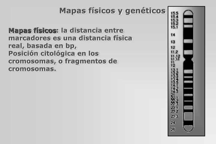 Mapas físicos y genéticos